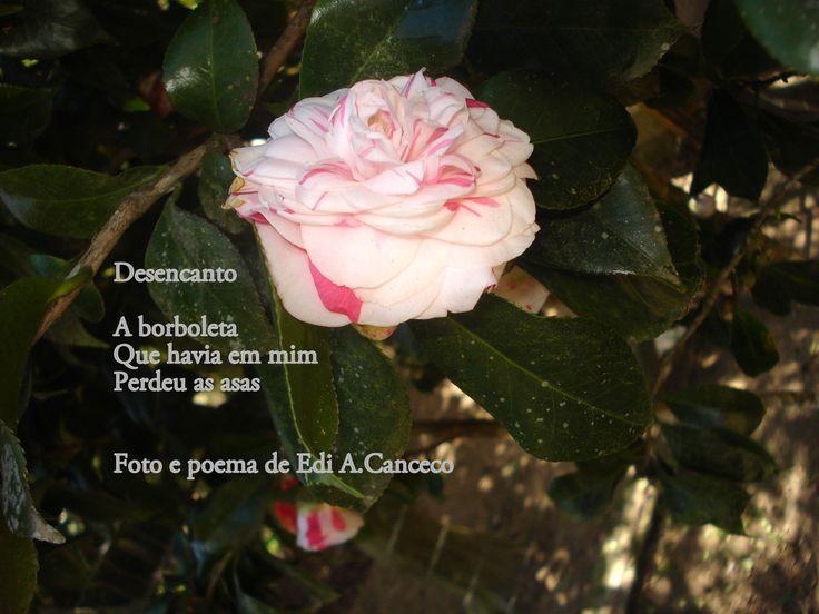 poema Desencanto