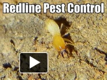 http://www.redlinepestcontrolsydney.com.au/pest-termite-control-penrith/ - Avail the highest level of professionalism with our superior termite control in Penrith and stay protected.