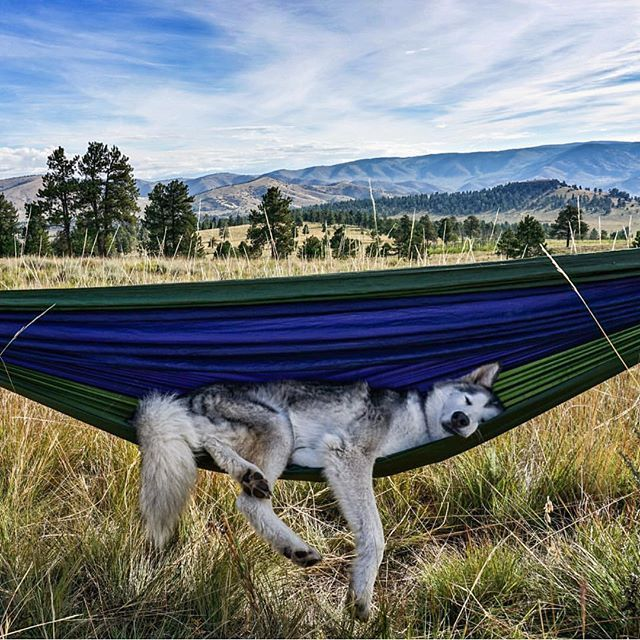 Some days are more difficult than others... #campingwithdogs @loki_the_wolfdog #camping #dog #hammock