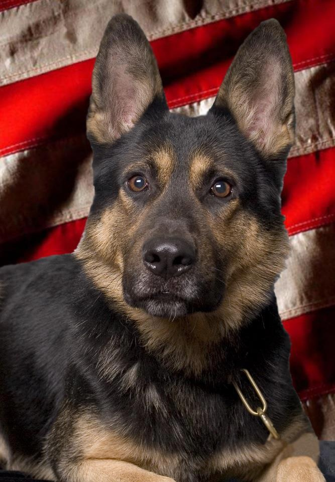 September 2012 Working Dog of the Month  K-9 Blesk of the Richmond County, GA Sheriff's Office  submitted by Sandra Smith Cullinan