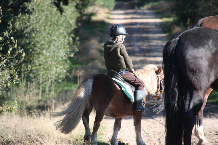 Paardrijden buitenrit beginners? Dit is een prachtige bosrit met goede begeleiding. De buitenrit wordt alleen met kleine groep gereden maximaal 4 ruiters.