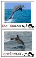 DianaEducació: vivències i recursos: Vocabulari Dofins (2ona. part)