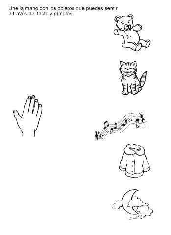 duyu organları el