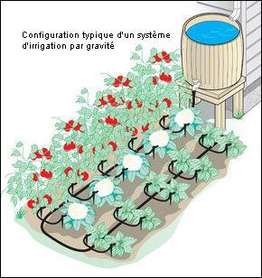 Système d'irrigation par gravité - Jardinage
