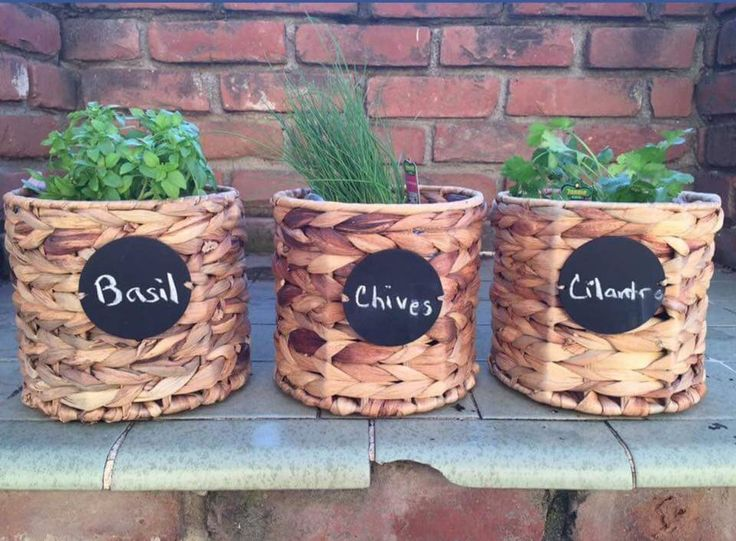 The Your Way Bin is perfect for your herb garden!