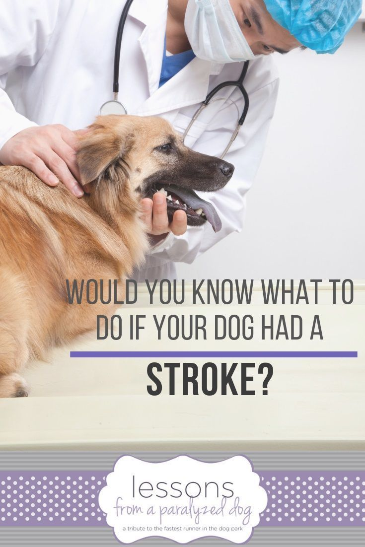 Would You Know If Your Dog Had A Stroke