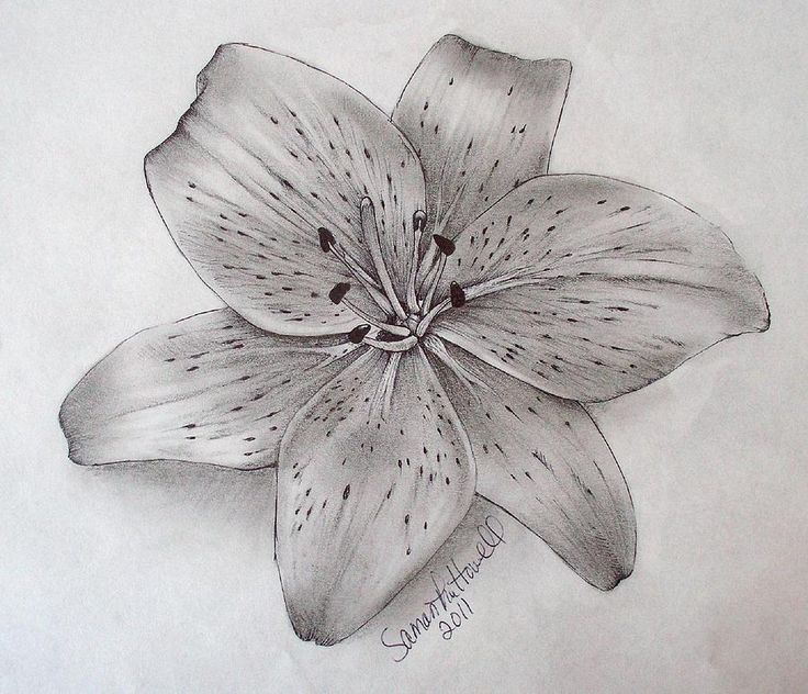 Tiger Lily | Tattoo ideas, In memory of and Tigers