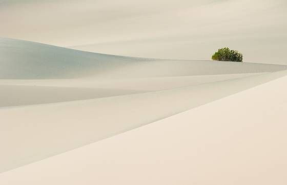 Dune Tranquility by Barbara Bender