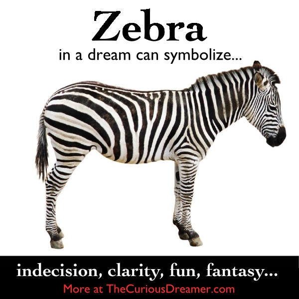 A zebra in a dream may symbolize...   More at TheCuriousDreamer.  #DreamMeaning #DreamSymbol