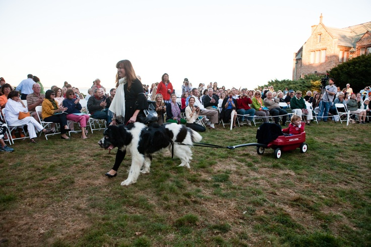 Strolling through the crowd. #CanineCouture #NewportRI #RoughPoint #NRF #fashion #style #pets #dogs: Pet Dogs, Fashion Styles, Style Pet