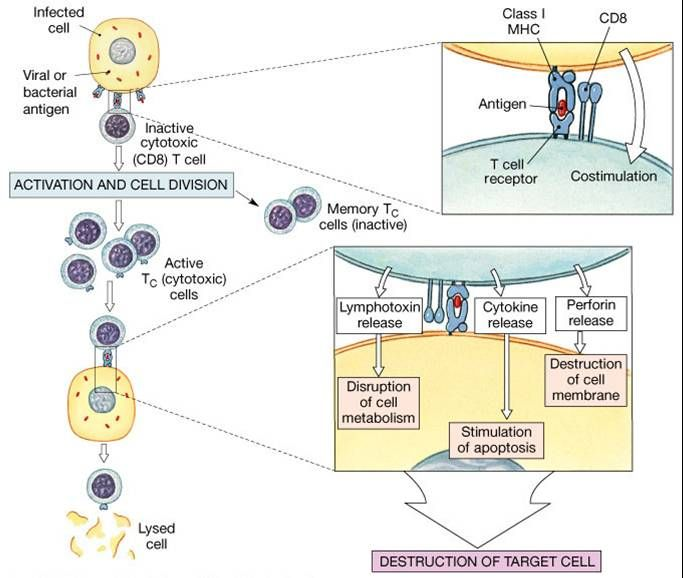 the recent pharmacological developments involving the human immune system Recent developments in understanding the role of the gut microbiota in brain health and disease  (gaba), noradrenaline, and dopamine) and modulate activation of the immune system, along with their ability to produce metabolites  which may also affect the composition of the microbiota finally, many pharmacological agents, 112 including.