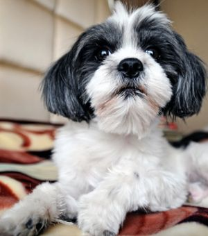 Dog-Friendly Hotels that Let Fido Stay for Free!