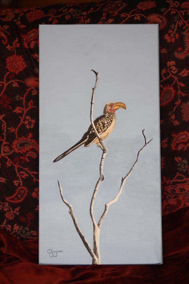Hornbill (CJoyner)