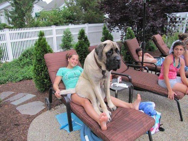O cachorro que só quer pegar uma corzinha: | 21 cachorros que estão completamente enganados a respeito do próprio tamanho