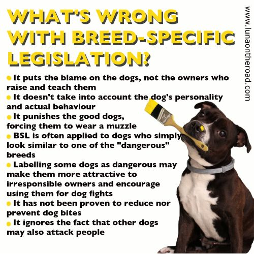 So what is BSL and why do we think it's important to fight against it? BSL stands for breed-specific legislation, which means there are laws applied to certain breeds (for example staffies and pitbull-type dogs), banning or restricting the ownership...