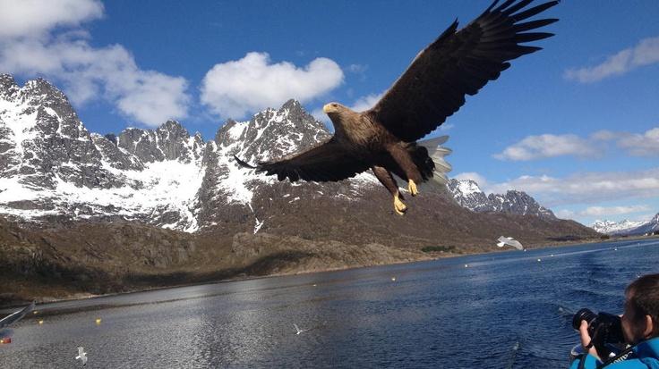 Amazing shot taken with iPhone.   Foto: Glenn Ruben Berg