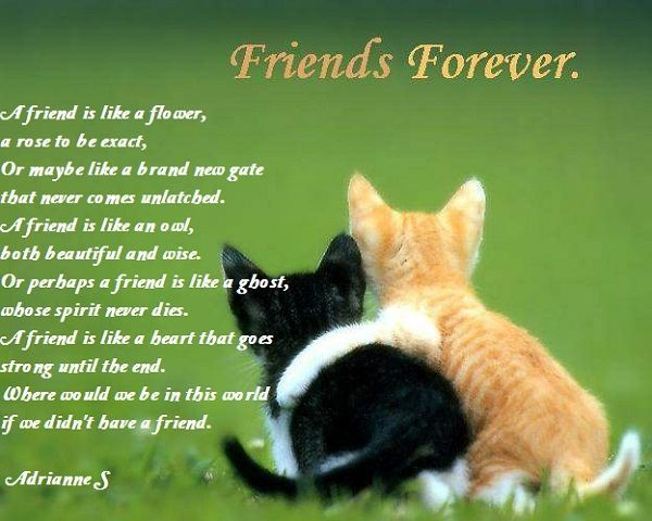 friendship poems for kids - Google Search: