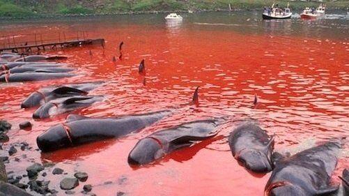Stop the killing of dolphins Kalderonskih! Petition · Международная общественная организация Гринпис: Остановите убийства Калдеронских дельфинов! · Change.org