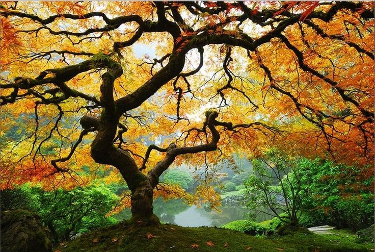 119 best Whimsical trees images on Pinterest | Painting art ...