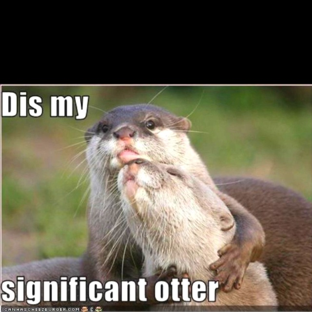 You really otter