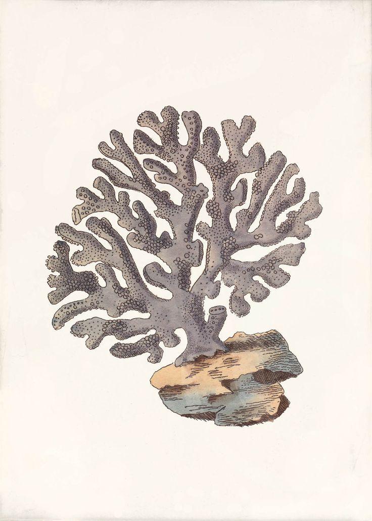 Coral Art Print Ideas Acr 237 Lico Abstracto Pinterest