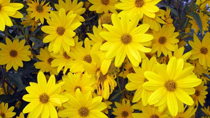 Spring Flowers Background | Yellow Spring Flowers wallpaper
