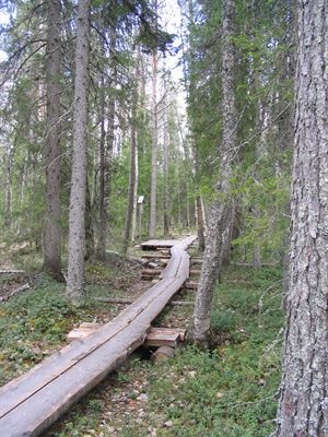 Safartica - activities in Lapland - also in summer time when the sun does not set!
