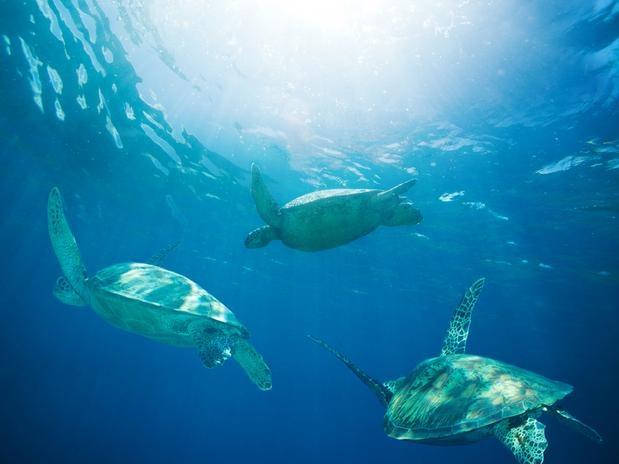 Tartarugas marinhas e iguanas se refugiam na área protegida do Parque Nacional Tobago Cays Marine Park de São Vicente e Granadinas                                  Foto: Shutterstock