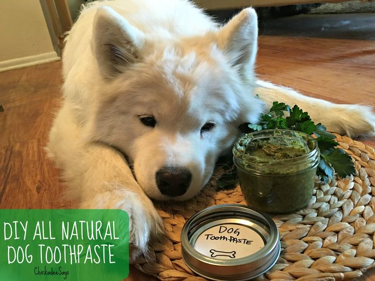 Homemade All Natural Dog Toothpaste