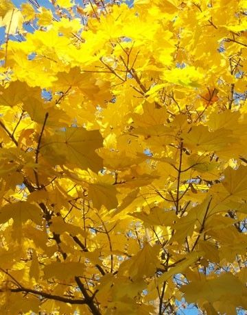 I LOVE the yellows just as much as the red & oranges....