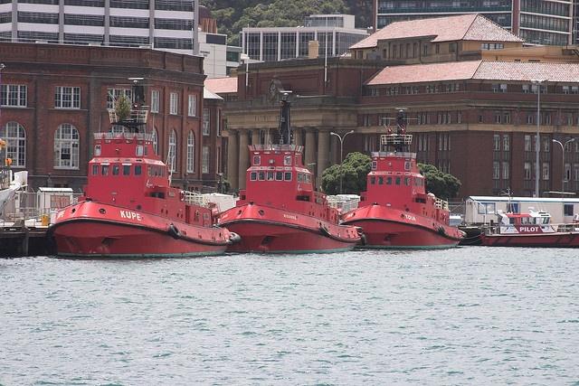 Tugboats, Wellington, New Zealand