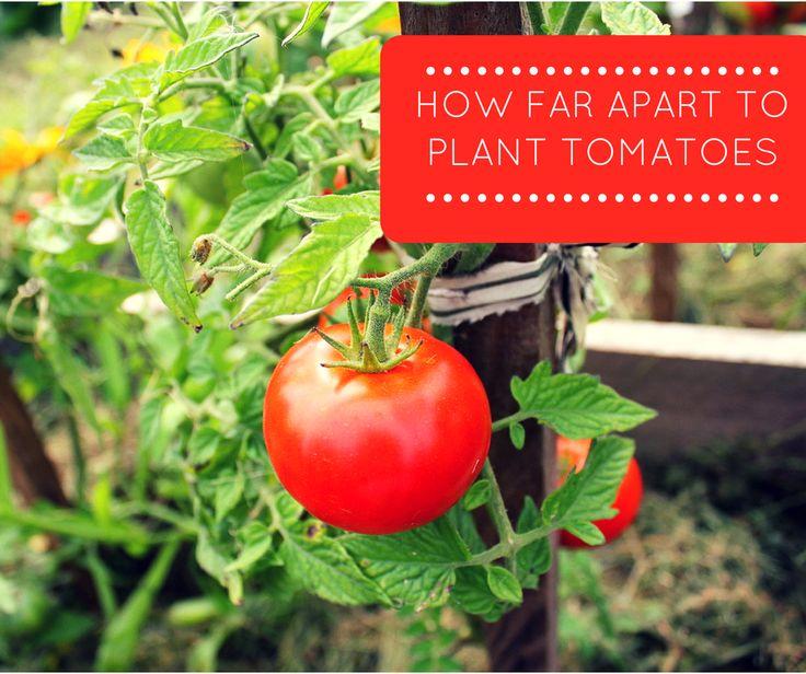 30 Best Garden - Ground Cover Images On Pinterest