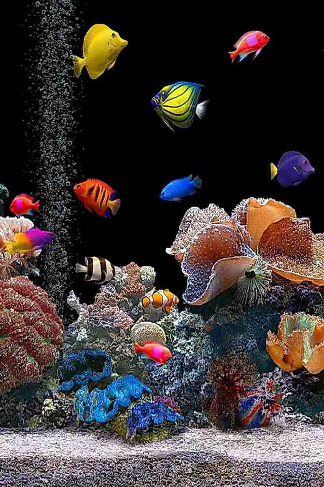 Salt water fish tank marine life fish gators etc for Saltwater reef fish