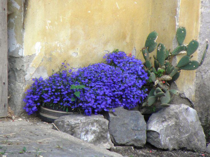 Still Life in Blue - Czech Republic.