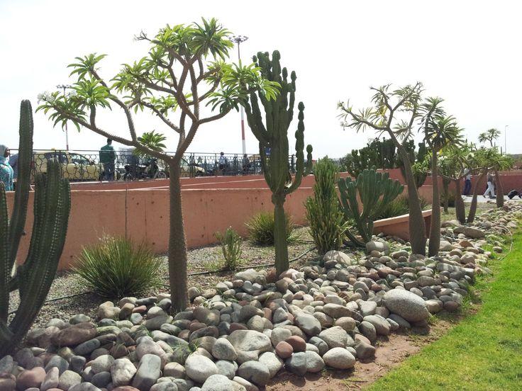 riviera dry garden