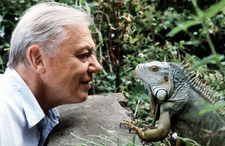 """Sir David Attenborough has long been a national treasure, best known for his awe-inspiring BBC documentaries such as Life, Planet Earth, and The Blue Planet. To celebrate the esteemed broadcaster's 91st birthday, we've compiled some of his best quotes, ranging from impassioned speeches on conservation to being a humanist. 1. """"I just wish the world was twice as big and half of it was still unexplored."""""""