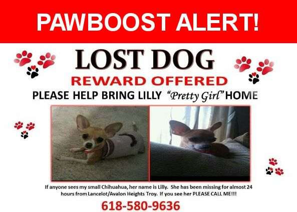 Please spread the word! Lilly was last seen in Troy, IL 62294.  Description: Lilly is 9 yrs old. She weighs about 3 lbs. She is beige/tan color with white around her nose and legs.  She also has a white stripe that goes from the top of her head to the top mid part of her neck. She almost looks like a miniature dear.   Nearest Address: Near Lancelot Ln & Camelford Dr