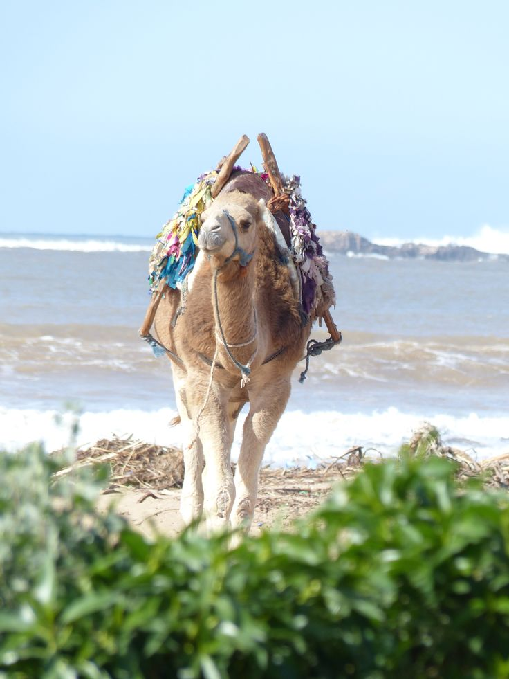 Essaouira, so Camel ;-)