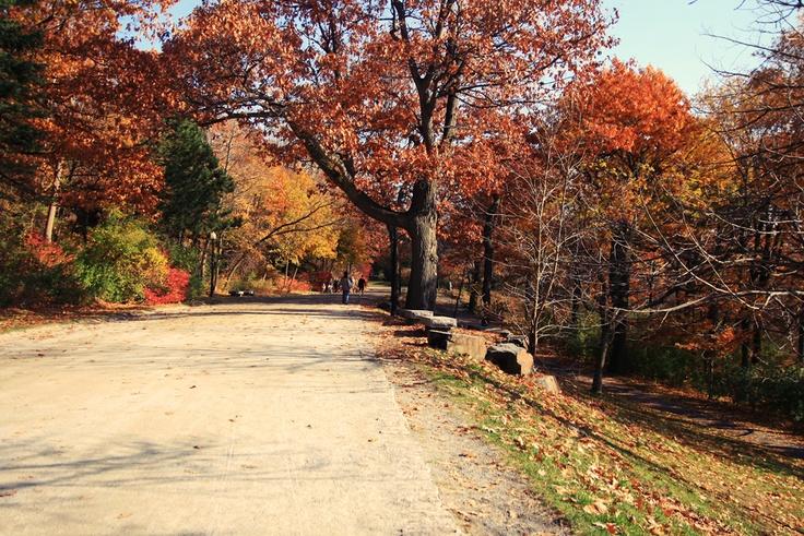 Montréal, automn, autumn