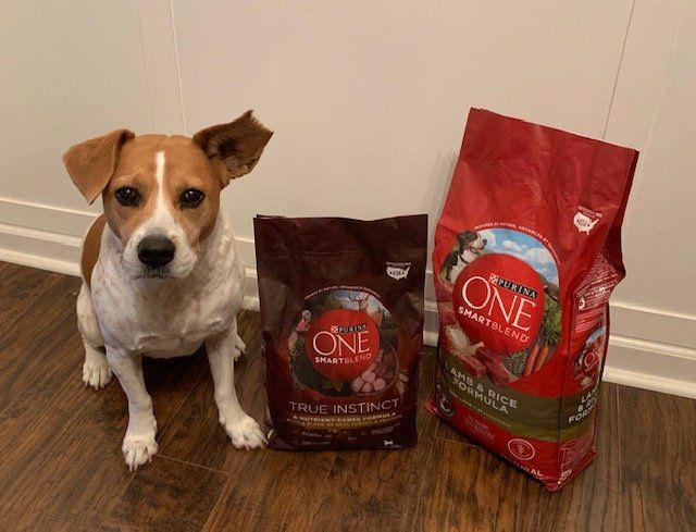 Take The Purina One 28 Day Challenge 28 Day Challenge Pet