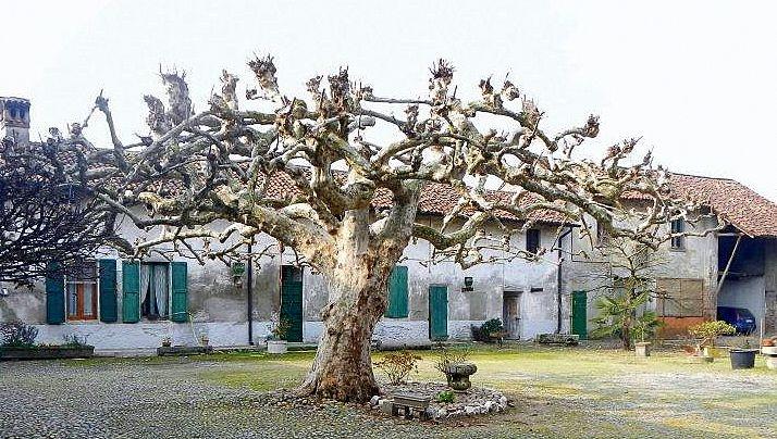 Sotto l'albero [Paolo T.]