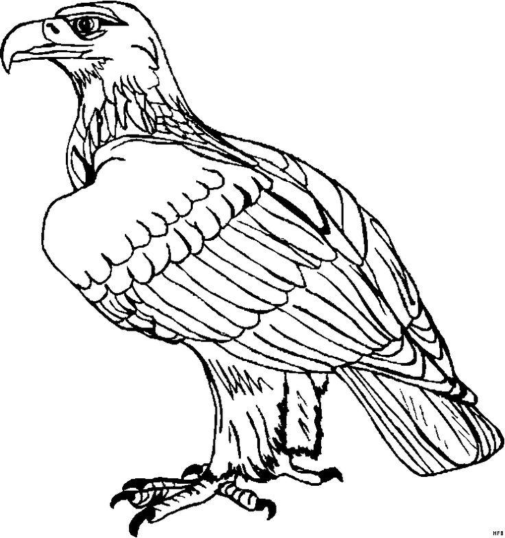 Adler Sitzend Ausmalbild Ausmalen Ausmalbilder Tiere Ausmalbilder