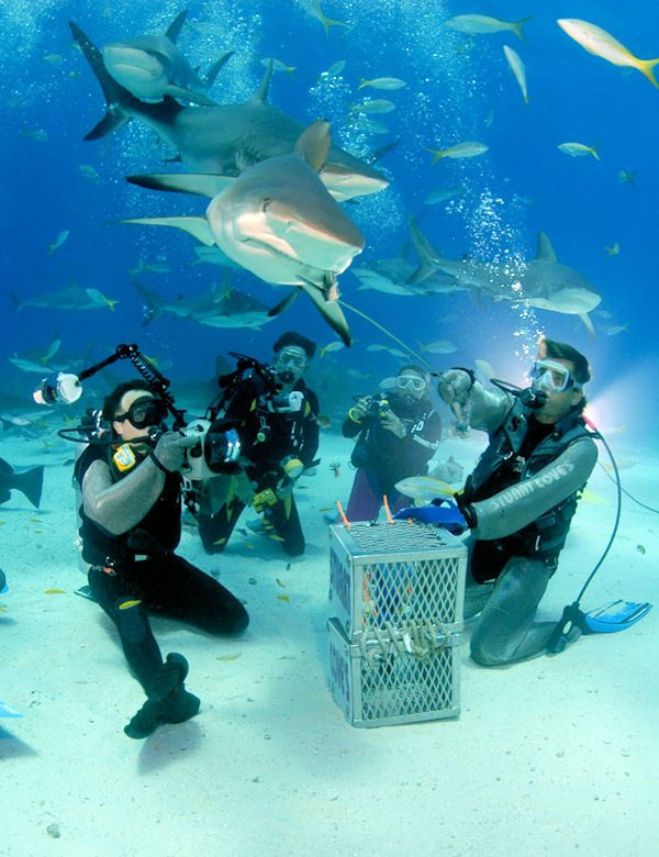 an analysis of shark feeding activities in florida Researchers analyzed statistics from shark attacks that occurred in florida's volusia county, dubbed the shark attack capital of the world, between 1956 and 2008 they also spent a year.