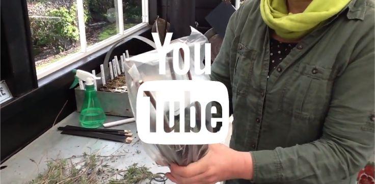 LAV ET TELT TIL DINE STIKLINGER - HAVEFOLKET on Youtube