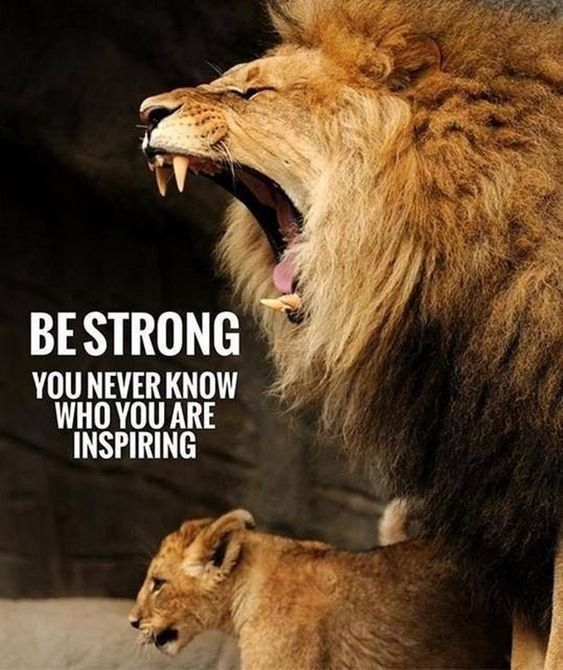 20 Motivational Quotes Introduced To You By Large And Highly effective Cats
