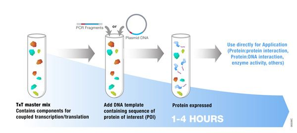 Applications of cell-free protein expression: Protein Pull-down assays Co-immunoprecipitation Gel shift assays