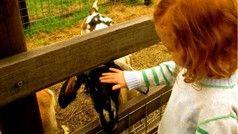 Collingwood Children's Farm, Attraction, Melbourne, Victoria, Australia