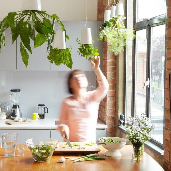Vertical Kitchen Gardening Ideas