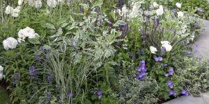 Kant-en-klare borderpakketten voor je tuin