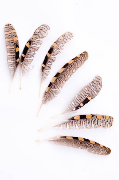 Bécasse - 8-10 cm - brun-caramel - Plumes.fr